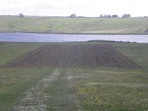 Discing and harrowing for corn (sowed 16 June 2010) at Rubha Mhòr, Lower Barvas Machair