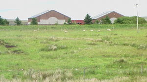 The site where the new school in Barvas is to be built, with its current residents
